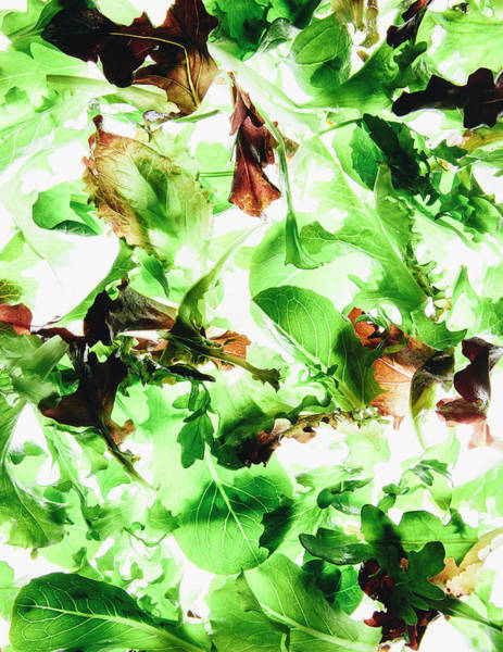 Wall Art - Photograph - Organic Mixed Salad Greens On White by Mint Images - Paul Edmondson