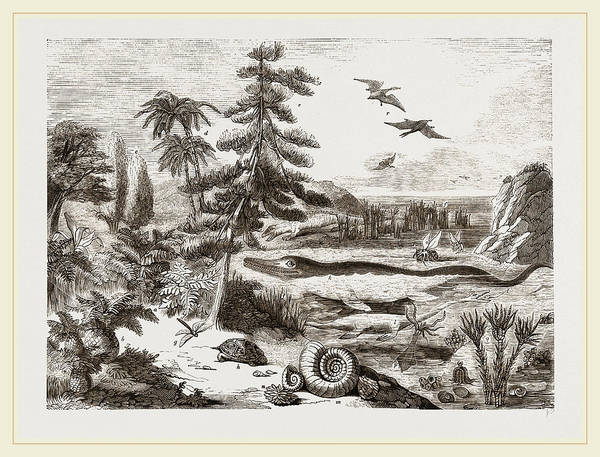 Organic Drawing - Organic Remains Restored by Litz Collection