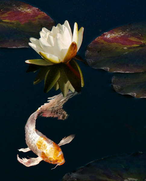 Koi Pond Photograph - Oriental Koi Fish And Water Lily Flower by Jennie Marie Schell