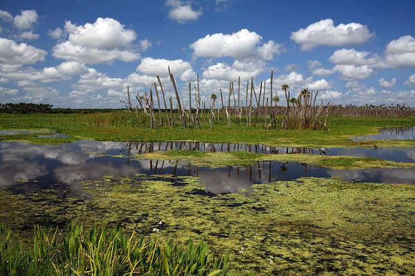 Gator Photograph - Orlando Wetlands Cloudscape 2 by Mike Reid