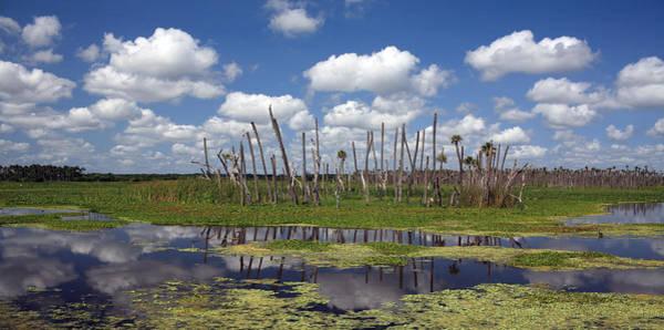 Gator Photograph - Orlando Wetlands Cloudscape by Mike Reid