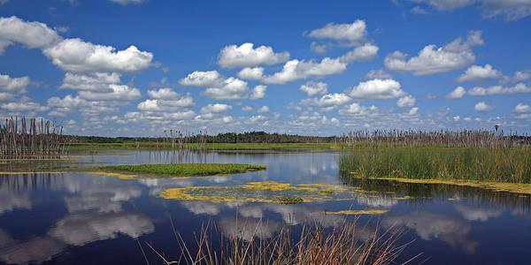 Gator Photograph - Orlando Wetlands Park Cloudscape 4 by Mike Reid
