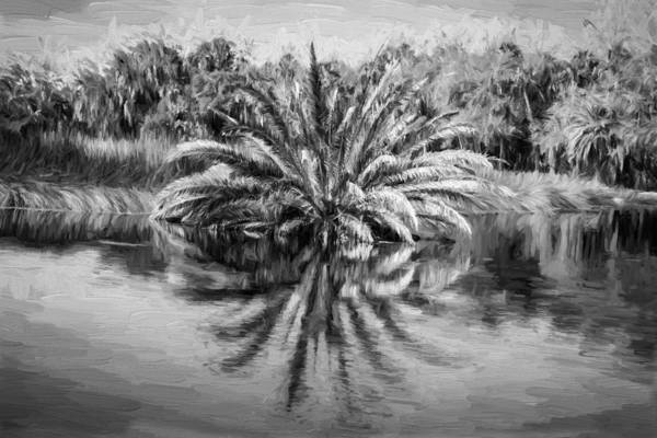Ormond Photograph - Ormond Scenic Loop Florida Palm Tree Painted Bw by Rich Franco