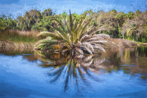 Ormond Photograph - Ormond Scenic Loop Florida Palm Tree Painted  by Rich Franco