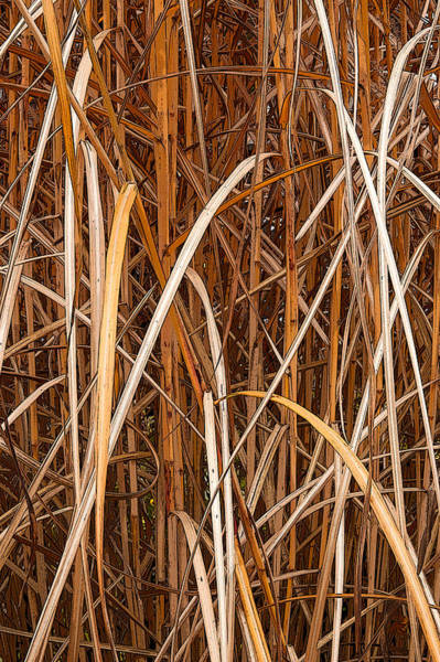 Photograph - Ornamental Grasses In The Fall by Rob Huntley