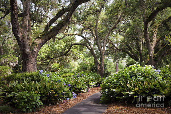 Photograph - Orton Plantation Scenic Walkway Brusnwick County Nc by Jo Ann Tomaselli