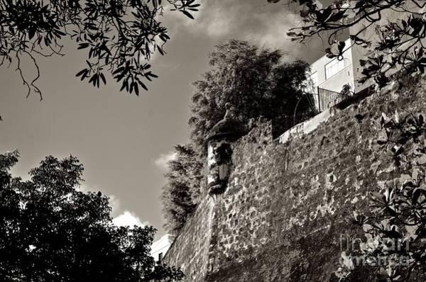 Photograph - Osj 4436sp by Ricardo J Ruiz de Porras