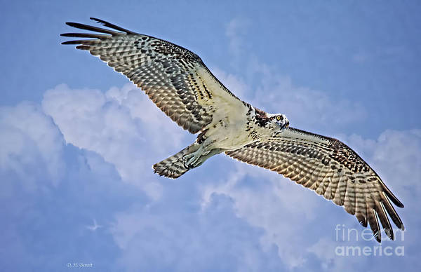 Soar Photograph - Osprey 91711 by Deborah Benoit