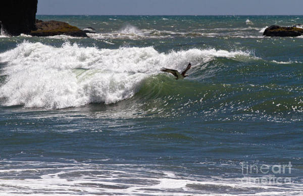 Photograph - Osprey In Flight by Stuart Gordon