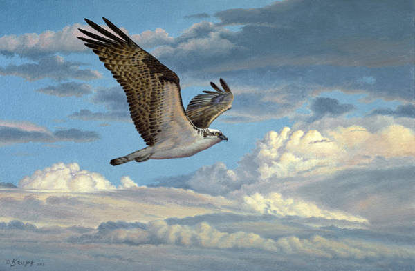 Wall Art - Painting - Osprey In The Clouds by Paul Krapf