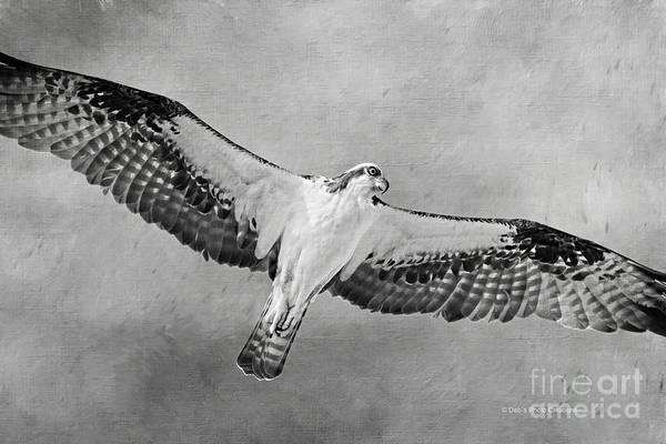 Photograph - Osprey Medicine by Deborah Benoit