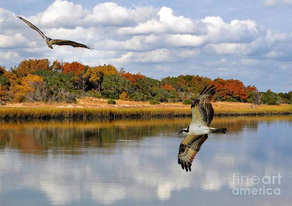 Kathy Baccari - Osprey Sanctuary