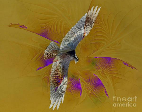 Photograph - Osprey Wild by Deborah Benoit