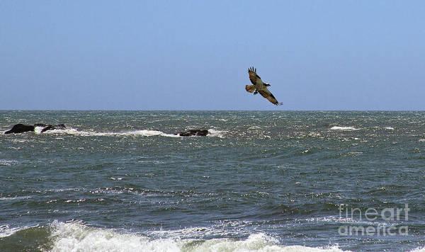 Photograph - Osprey With Catch II by Stuart Gordon