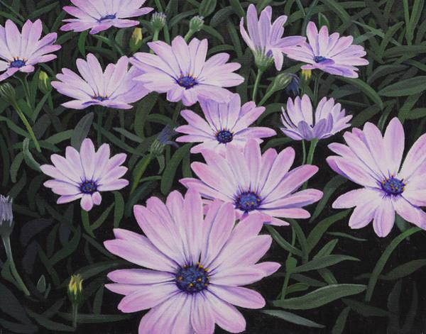 Osteospermum Painting - Osteospermums by Nicholas Ryding