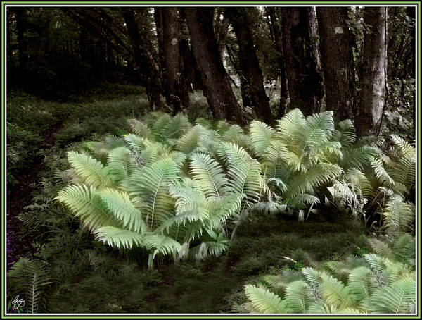 Photograph - Ostrich Ferns In Langdon Woods by Wayne King
