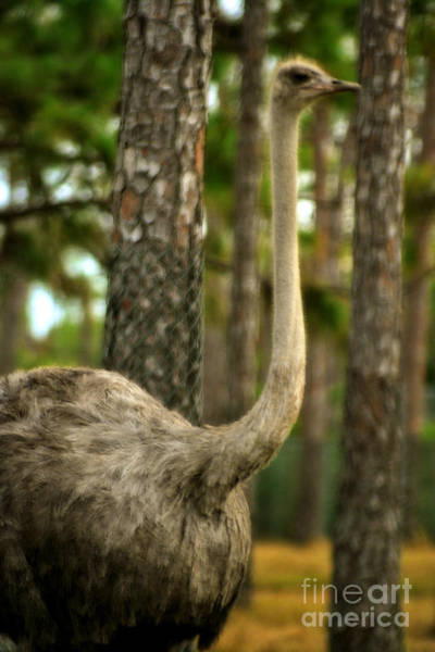 Photograph - Ostrich by Doc Braham