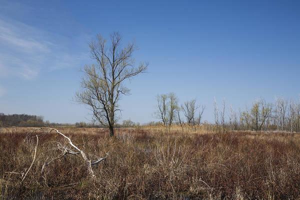 Photograph - Ottawa Wildlife Refuge by Dale Kincaid
