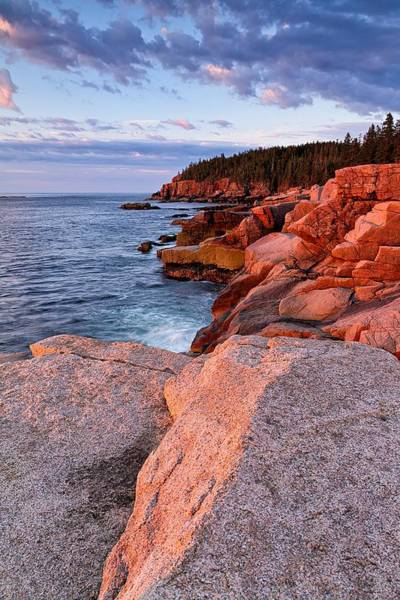 Photograph - Otter Cliffs At First Light by Jeff Sinon