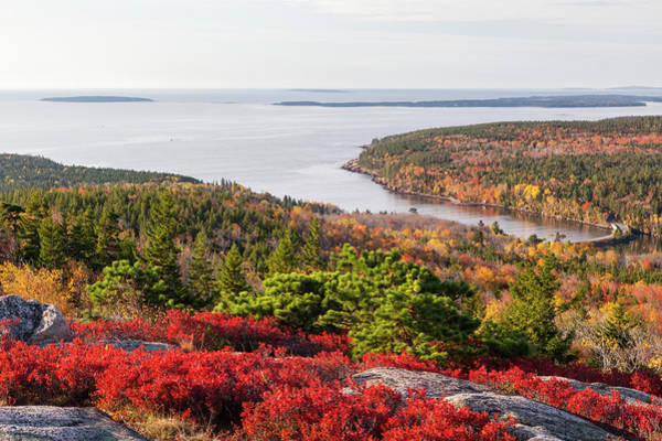 New England Autumn Photograph - Otter Cove From Gorham Mountain In by Picturelake