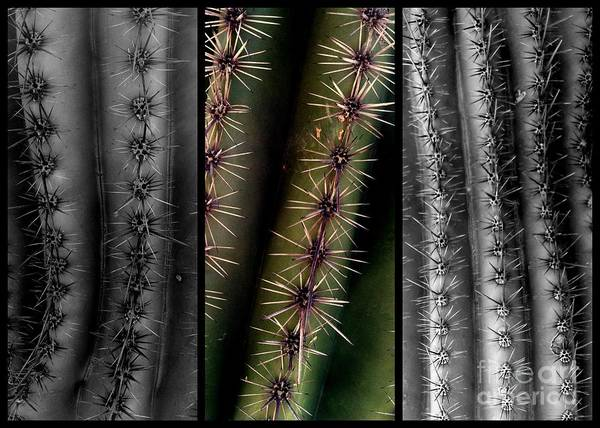 Photograph - Ouchie Two by Marlene Burns