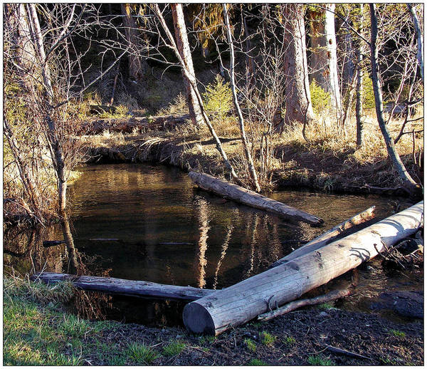 Photograph - Our Cabin Had Running Water by Susan Kinney