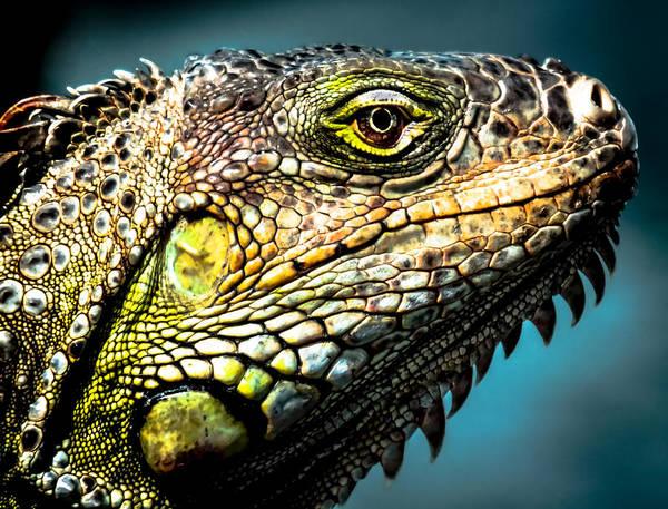 Iguana Photograph - Our Creators Mosaic Art by Karen Wiles