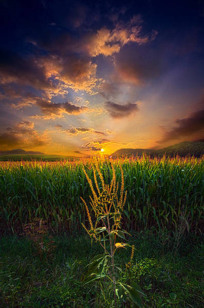 Photograph - Our Time Together by Phil Koch