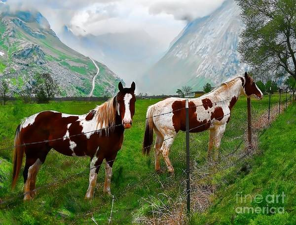 Liane Photograph - Out In The Pasture by Liane Wright