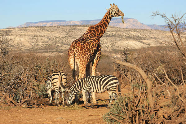 Wall Art - Photograph - Out Of Africa by Donna Kennedy