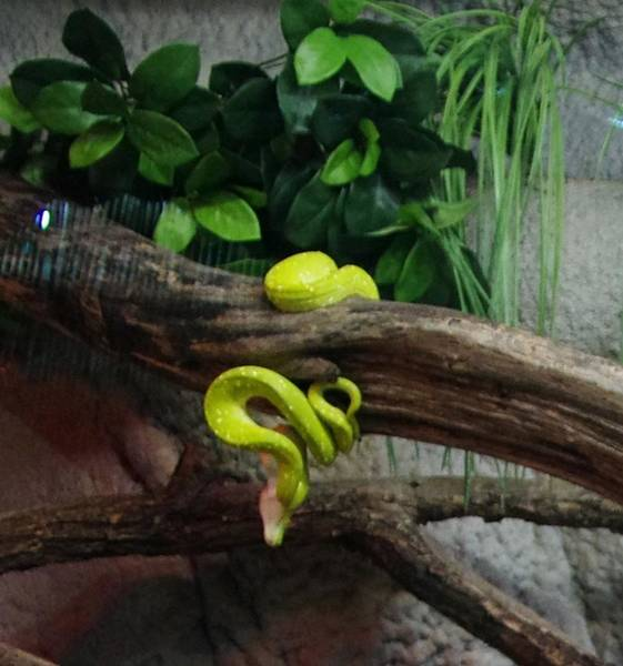 Photograph - Out Of Africa Tree Snake by Phyllis Spoor