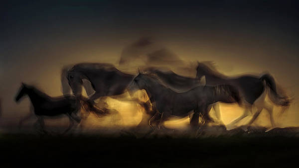 Gallop Wall Art - Photograph - Out Of Hell by Milan Malovrh