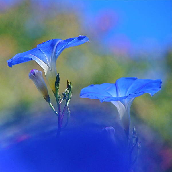Photograph - Out Of The Blue by Byron Varvarigos