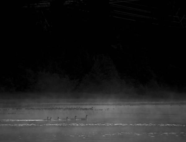 Duck Hunt Photograph - Out Of The Shadows by Aaron Bedell