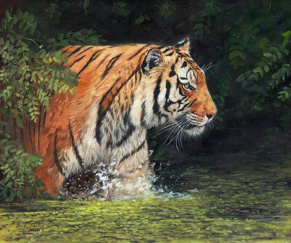 Bengal Tiger Painting - Out Of The Shadows by David Stribbling