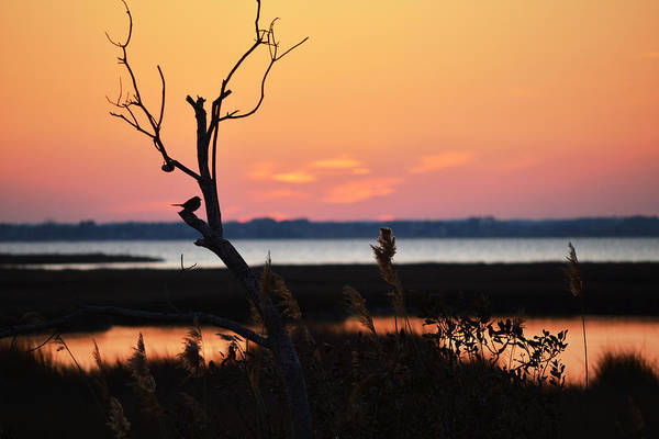 Photograph - Ocean City Sunset Out On A Limb by Bill Swartwout Photography