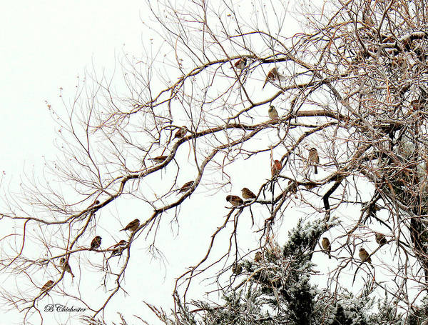 Wall Art - Photograph - Out On A Limb First Snow by Barbara Chichester