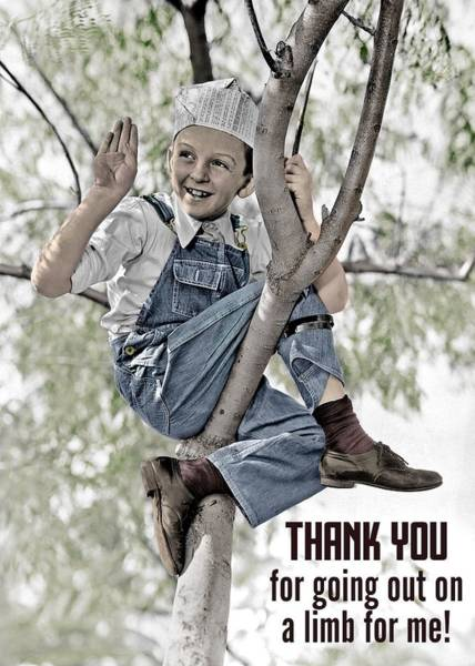 Wall Art - Photograph - Out On A Limb Thank You Greeting Card by Communique Cards