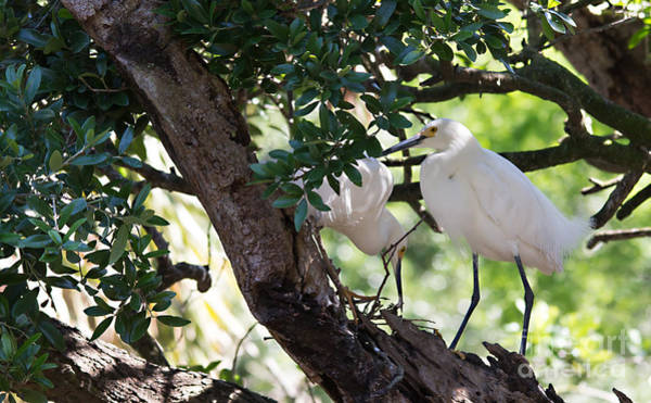 Photograph - Out On A Limb by Mary Lou Chmura