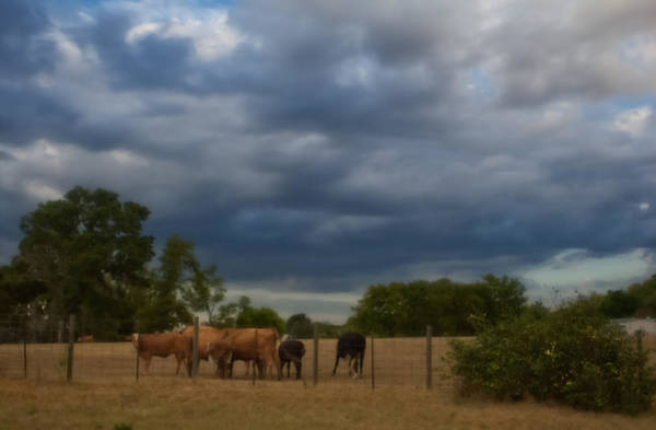 Photograph - Out To Pasture by Kim Henderson