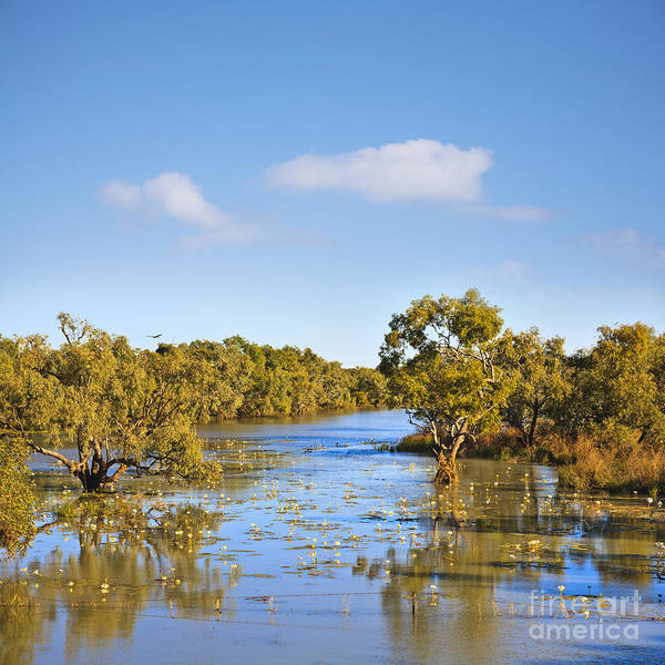 James River Photograph - Outback Australia Northern Territory James River Trees In Water by Colin and Linda McKie