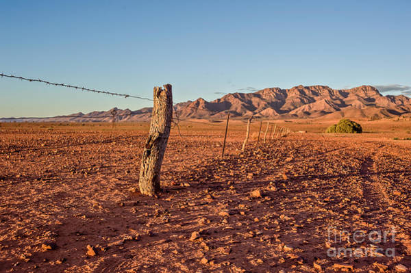 Photograph - Outback Fence by Ray Warren