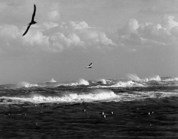 Just Birds Photograph - Outer Banks by Bruce Roberts