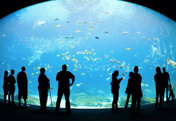 Georgia Aquarium Wall Art - Photograph - Outside Looking In by Alexey Stiop