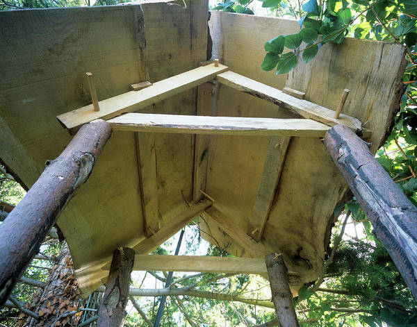 Toilet Photograph - Outside Toilet Roof by Adam Hart-davis/science Photo Library