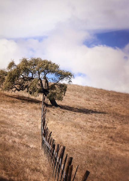 Coast Live Oak Photograph - Over The Line by Caitlyn  Grasso