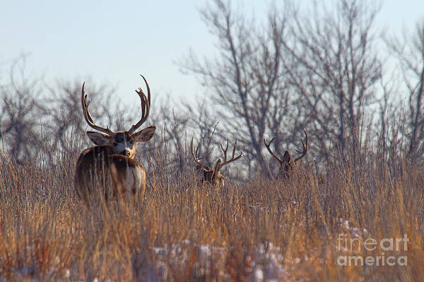 Photograph - Over The Shoulder by Jim Garrison