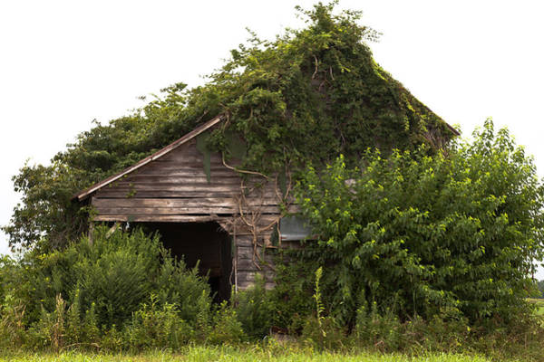 Photograph - Overgrown By Green by Jo Ann Tomaselli