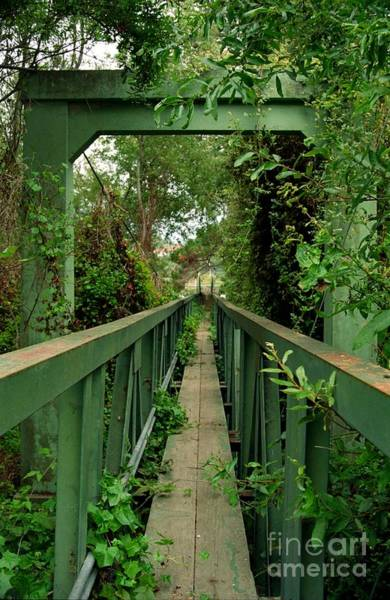 Photograph - Overgrown Footbridge 2 by James B Toy