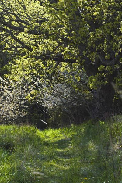 Photograph - Overgrown Garden by Yulia Kazansky